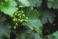 Vineyard 9 royalty free stock photos
