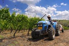 Vineyard. Tractor working at the vineyard Royalty Free Stock Photos