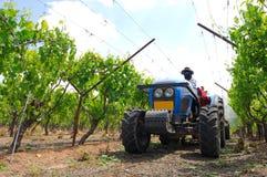 Vineyard. Tractor working at the vineyard Stock Photos
