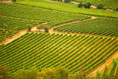 Vineyard from above. Aerial view of a vineyard in the South of France Royalty Free Stock Photo