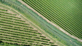 Vineyard from above Stock Photos