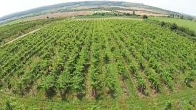 Vineyard aerial stock video