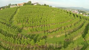 Vineyard aerial stock video footage