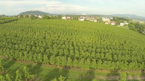 Vineyard aerial stock footage