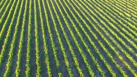 Vineyard Aerial Views stock video footage