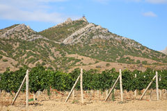 Vineyard against mountains Stock Images