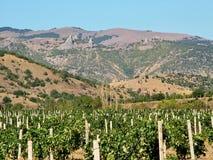 Vineyard against mountains in eastern Crimea. In September stock images