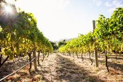 Vineyard against sky Stock Photography