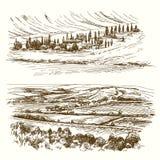 Vineyard. Agricultural landscape. royalty free illustration