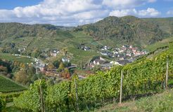 Vineyard in the ahr valley near Bad Neuenahr,Germany Royalty Free Stock Photos