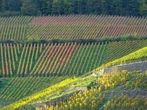Vineyard at Ahrweiler. Rhineland-Palatinate in sommer stock images