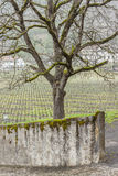 Vineyard - Aigle, Switzerland. Stock Photo
