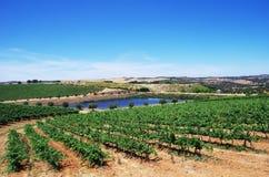 Vineyard at Alentejo region of Portugal Royalty Free Stock Photos