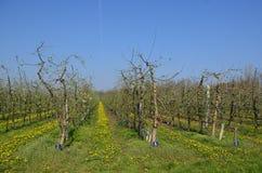 Vineyard alignment Stock Photography