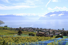 Vineyard along the lake, Switzerland Royalty Free Stock Images