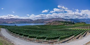 Vineyard along waterfront Royalty Free Stock Photo