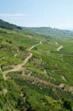 Vineyard, Alsace Stock Images