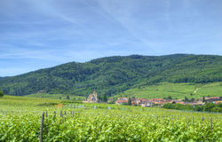 Vineyard in Alsace. Fields of grapewine in Alsace - Route du vin - France royalty free stock photo