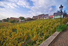 Vineyard, Alsace, France Royalty Free Stock Photography