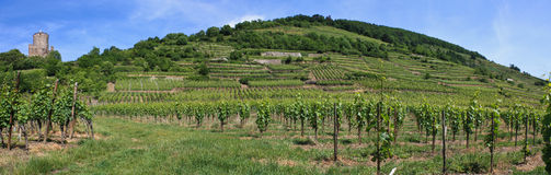 Vineyard in Alsace - France. Panorama of a vine in France with a tower in the background stock photos