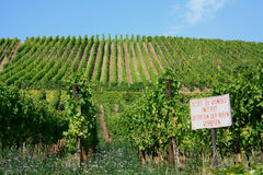 Vineyard in Alsace, France. Vineyards of white wine near Riquewirh, Alsace, France with a private property sign Royalty Free Stock Photography