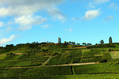 Vineyard in Alsace, France Stock Images