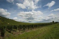 Vineyard in Alsace Stock Photos