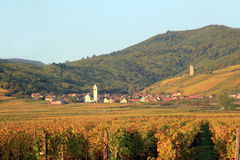 Vineyard of Alsace (Katzenthal) Stock Photography