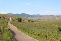 Vineyard of Alsace (Katzenthal) Royalty Free Stock Photography