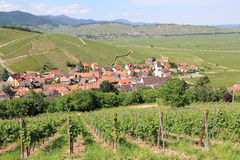 Vineyard of Alsace Royalty Free Stock Images