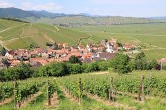 Vineyard of Alsace. Landscape of the wonderful Alsatian vineyard Royalty Free Stock Images