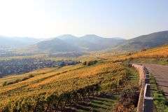 Vineyard of Alsace Royalty Free Stock Image