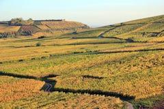 Vineyard of Alsace Stock Photo