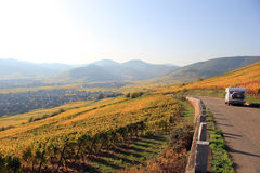 Vineyard of Alsace Stock Image
