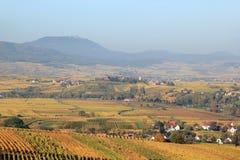 Vineyard of Alsace Stock Photos