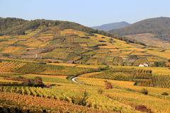 Vineyard of Alsace Royalty Free Stock Photography