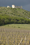 Vineyard with ancient ruine on the back. Vineyard in sunshine with ancient ruin and dark clouds on the back Stock Photography