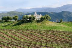 Free Vineyard And House In California Stock Images - 19039734