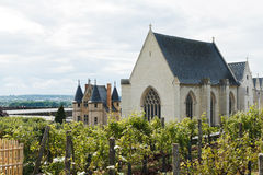 Vineyard in Angers Castle, France Royalty Free Stock Photo