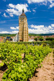 Vineyard at Arbois Stock Photo