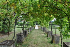Vineyard arch Near Lucca Tuscany Stock Photo