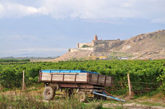 Vineyard in Armenia. Grape field in the Ararat valley during harvest time. View of the Khor Virap and Mount Ararat Stock Photos