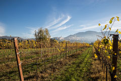 Vineyard and Assisi Royalty Free Stock Images
