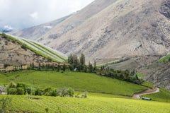 Vineyard in Atacama Desert, Elqui Valley, Chile Stock Photos