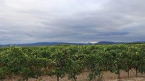Vineyard in Aude filmed in timelapse stock video