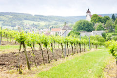 Vineyard in Austria Royalty Free Stock Image