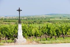 Vineyard, Austria Stock Images
