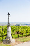 Vineyard, Austria Royalty Free Stock Photography