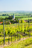 Vineyard, Austria Stock Image