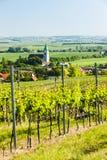 Vineyard, Austria. Vineyard near Unterretzbach, Lower Austria, Austria Stock Image